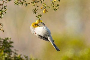 Audubon Arizona